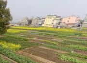 南京市高淳區姜家汶溪村地塊