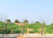 南京市溧水区博士牛地块1