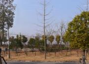 宿遷市泗陽縣城南商務中心西側地塊