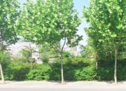 宿迁市泗阳县育才小学南侧地块