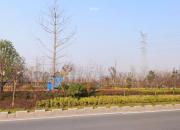 宿迁市泗阳县上海路城市综合体地块